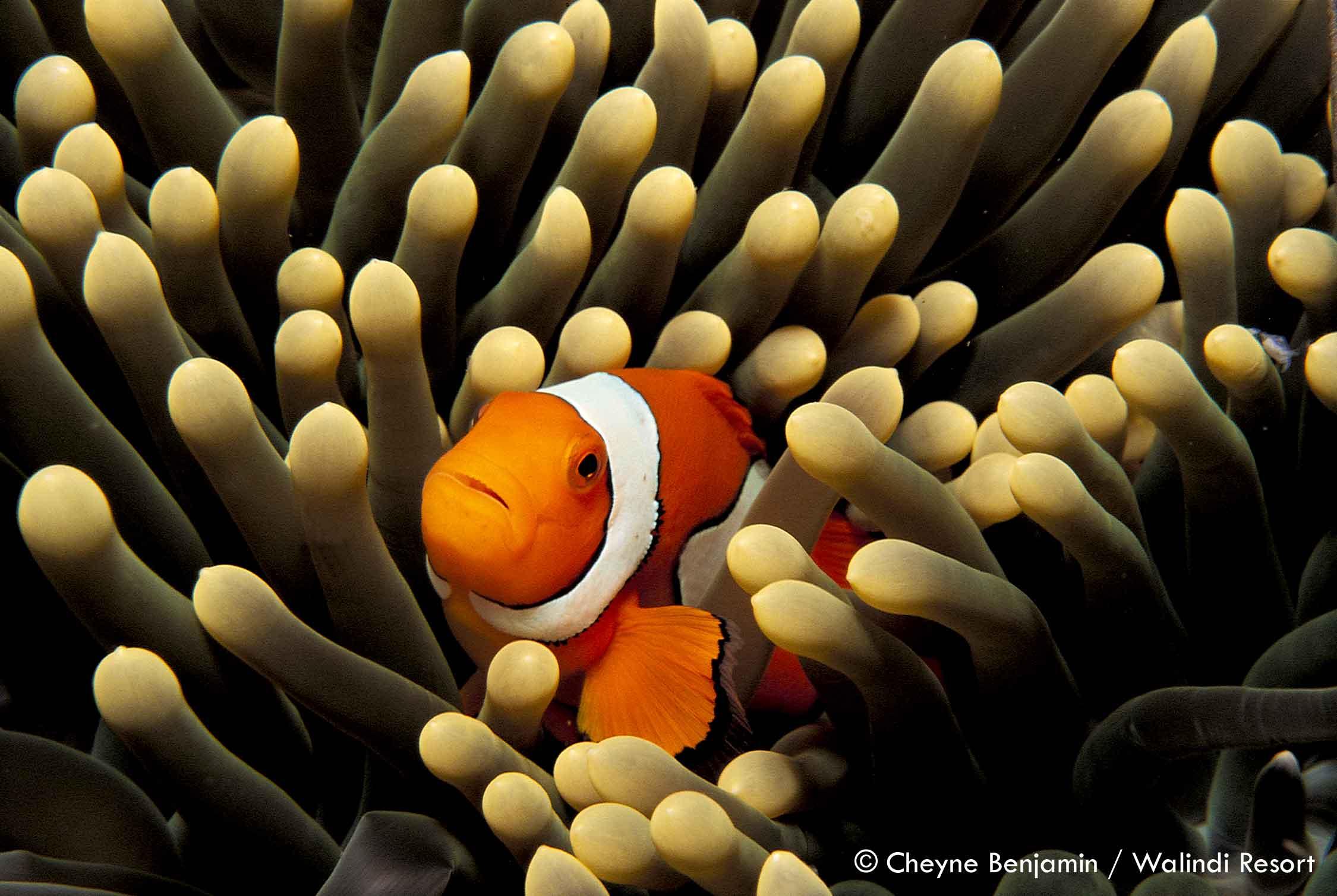 Plongée en Papouasie